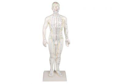 Chinesische Akupunkturfigur, männlich, 1x1 Stück